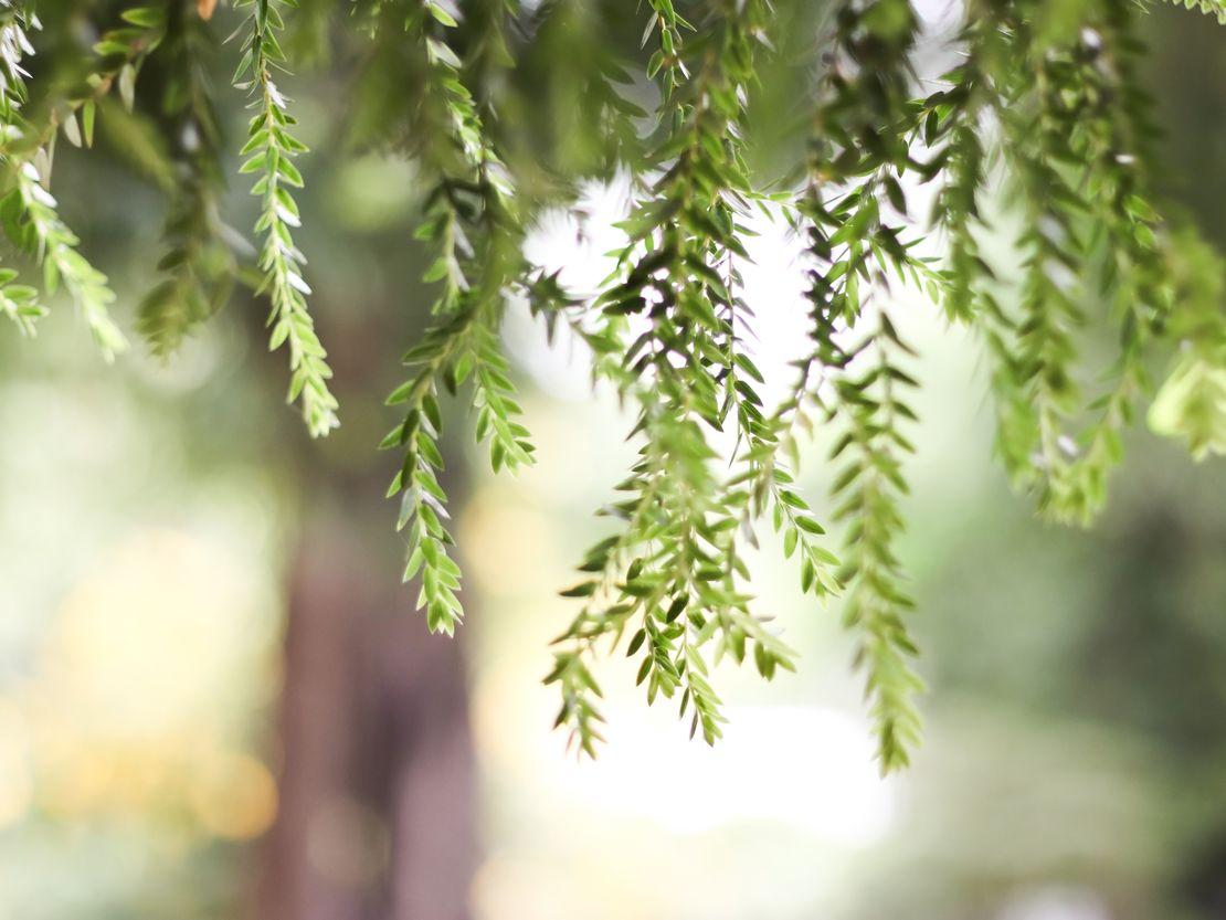 motywy roślinne we wnętrzach